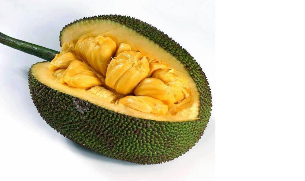 jaca-brazil-fruit